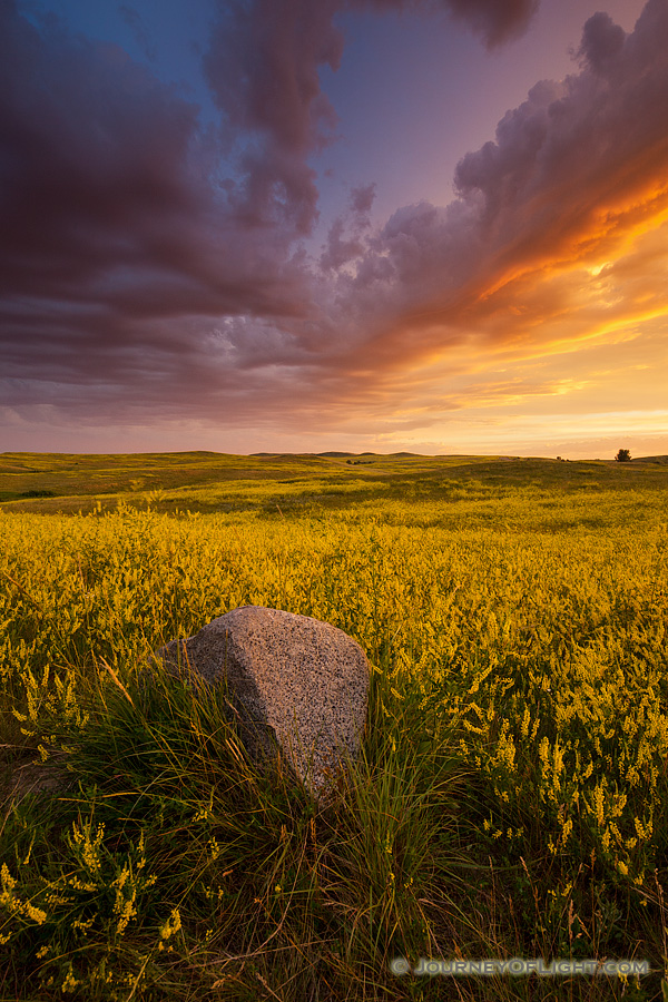 Clouds from a passing storm are illuminated by the brilliant warm hues of the rising sun above a field of wildflowers in Theodore Roosevelt National Park.