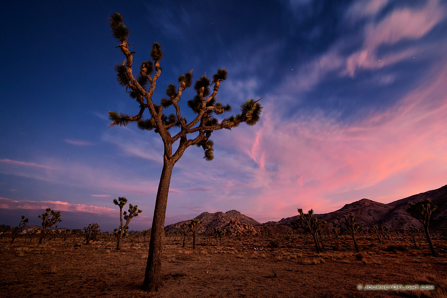 Twilight Descends Over Joshua Tree