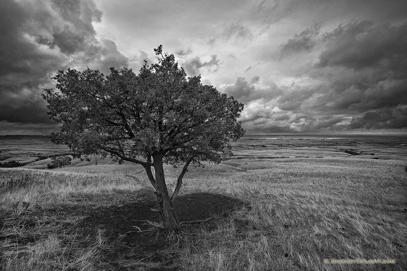 A lone tree watches over the vast prairie while a storm brews on the horizon in the Sage Creek area at Badlands National Park in South Dakota. - Badlands NP Picture