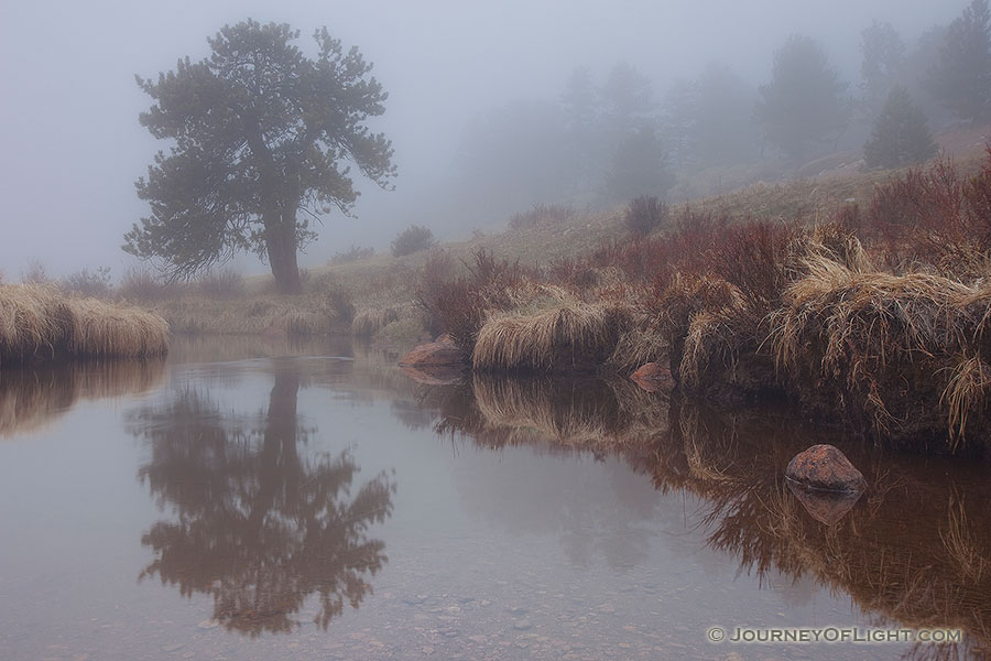 On a cool evening a fog decends upon Horseshoe Park in Rocky Mountain National Park. - Rocky Mountain NP Photography