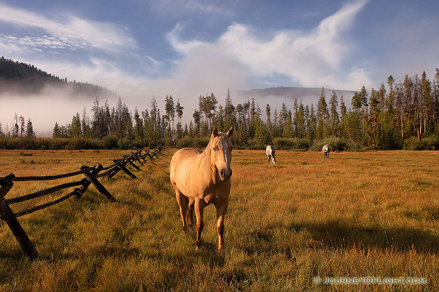 On a warm August day, just after a friend I began our hike into the North Inlet trail near Grand Lake, these friendly horses greeted us, almost welcoming us to our journey ahead. - Colorado Photography