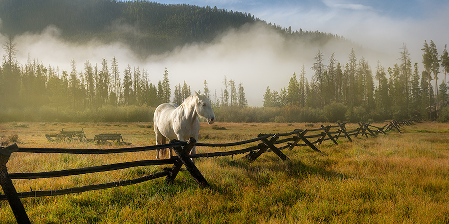 A photograph of a white horse and a fence on a foggy mountain landscape in Colorado. - Colorado Photography