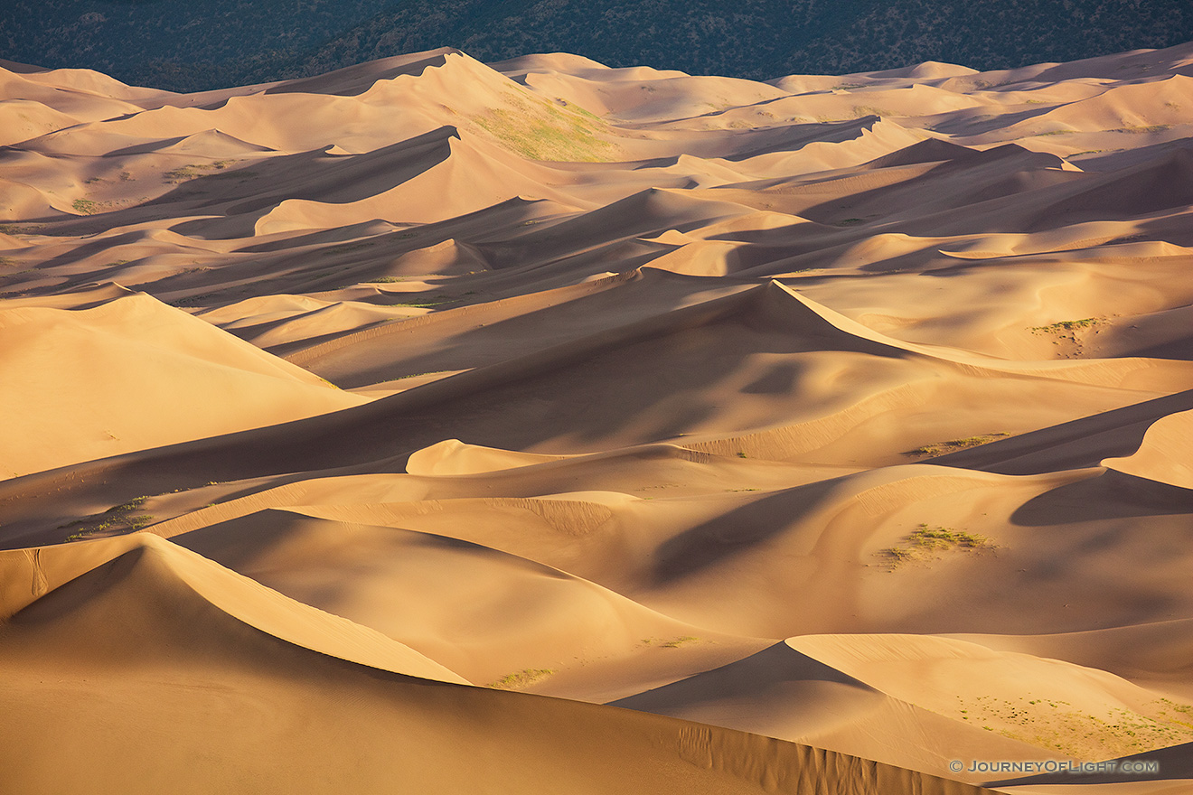 Sand dunes glow in the morning sun at Great Sand Dunes National Park, Colorado. - Great Sand Dunes NP Picture
