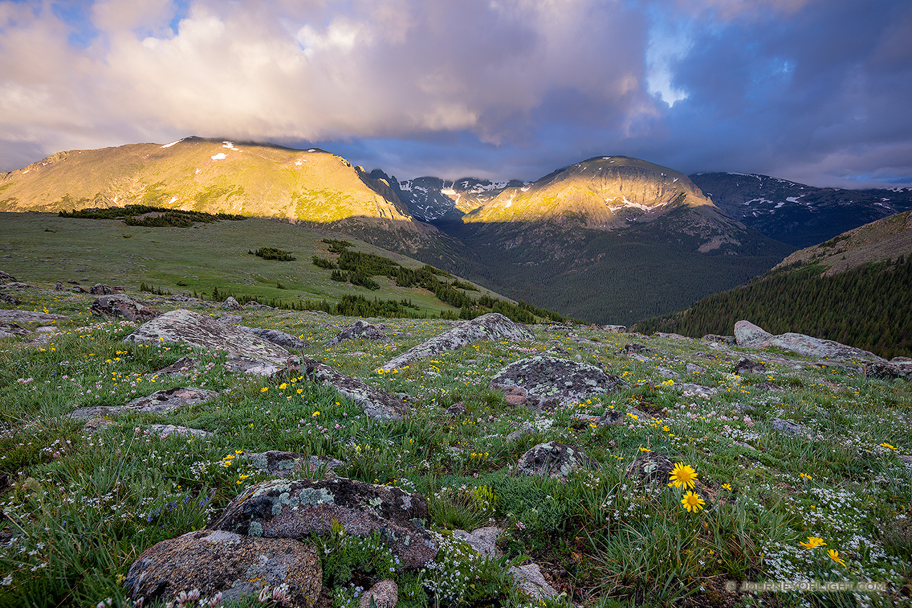 Light from the rising sun illuminates the peaks of Rocky Mountain National Park and wildflowers dot the landscape high upon the tundra. - Colorado Picture