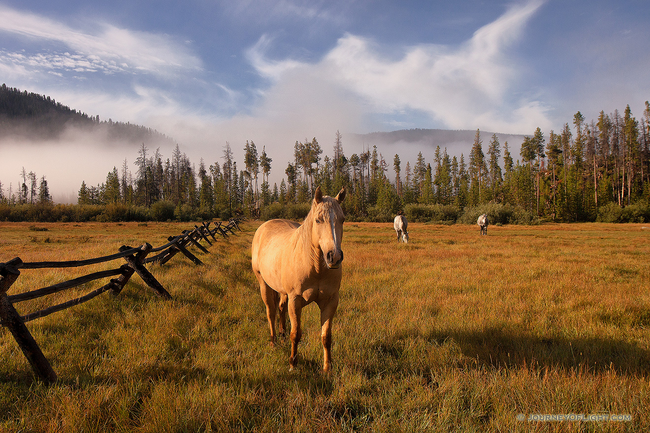 On a warm August day, just after a friend I began our hike into the North Inlet trail near Grand Lake, these friendly horses greeted us, almost welcoming us to our journey ahead. - Colorado Picture