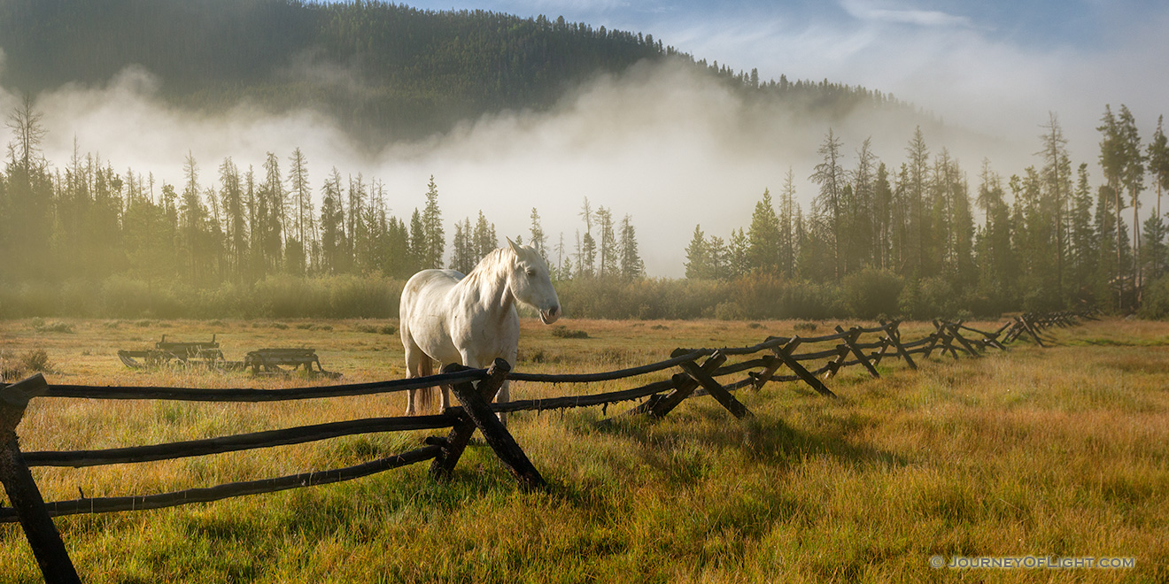 A photograph of a white horse and a fence on a foggy mountain landscape in Colorado. - Colorado Picture