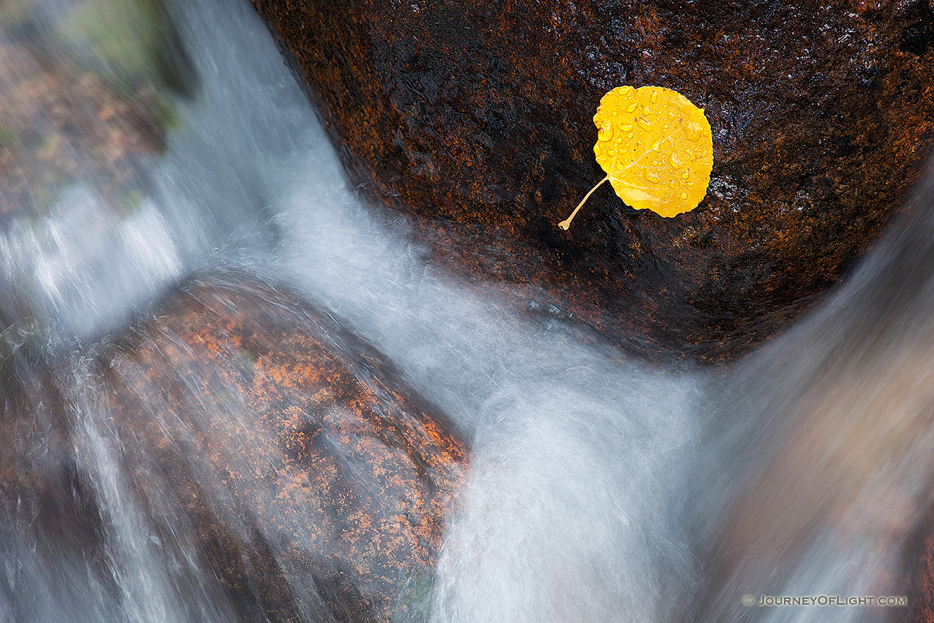 A photograph of a lone fallen autumn aspen leaf grasps to a rock as the Big Thompson cascades by. Colorado
