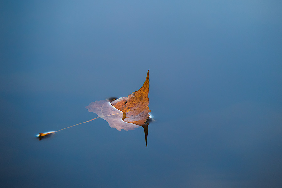 A fallen autumn leaf floats on the calm surface of Wehrspann Lake at Chalco Hills Recreation Area. - Nebraska Photography