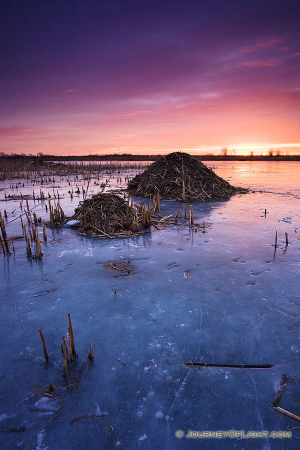 On a chilly morning I photographed several beaver huts nestled throughout Nathan's Lake at Boyer Chute National Wildlife Refuge. - Boyer Chute Photography