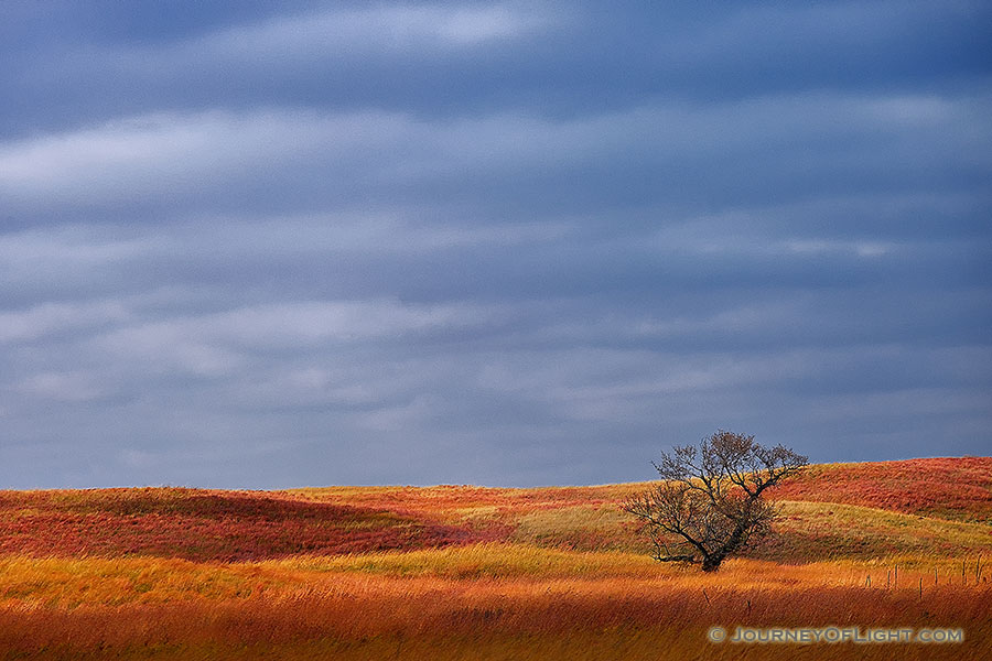 A single tree sits upon the sandhills at Ft. Niobrara National Wildlife Refuge. - Ft. Niobrara Photography