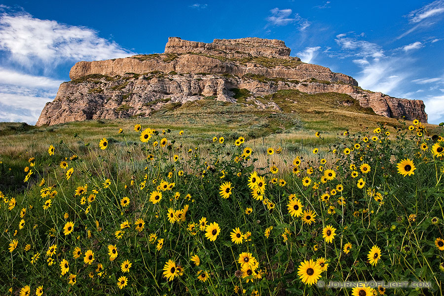 On a sunny autumn afternoon, sunflowers grow in front of Courthouse Rock in western Nebraska. - Nebraska Photography
