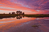 This photograph captures the reflection of the sunset as the sun illuminates the leading edge of clouds at Frank Shoemaker Marsh near Lincoln, Nebraska, one of the few remaining homes of the endangered Salt Creek Tiger Beetle. - Nebraska Photograph