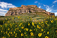 On a sunny autumn afternoon, sunflowers grow in front of Courthouse Rock in western Nebraska. - Nebraska Photograph