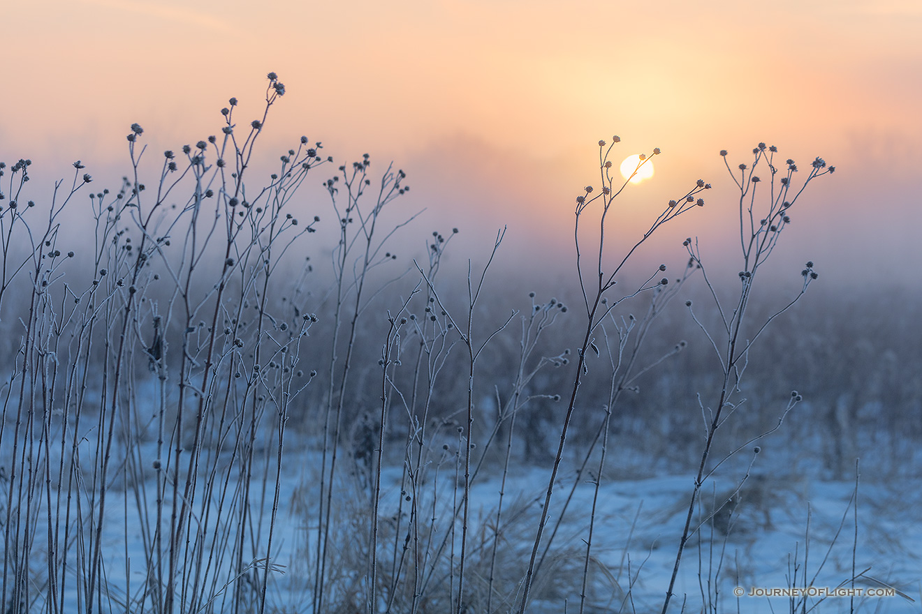 On a cold winter day, the sun illuminates the cold winter prairie at Boyer Chute National Wildlife Refuge in eastern Nebraska. - Boyer Chute Picture