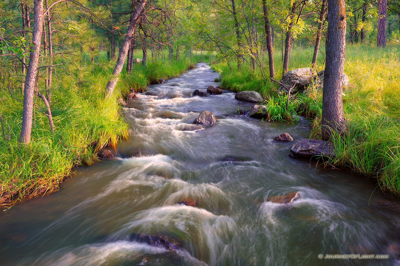 Grace Coolidge Stream through the forest in Custer State Park of the Black Hills, South Dakota. - South Dakota Picture