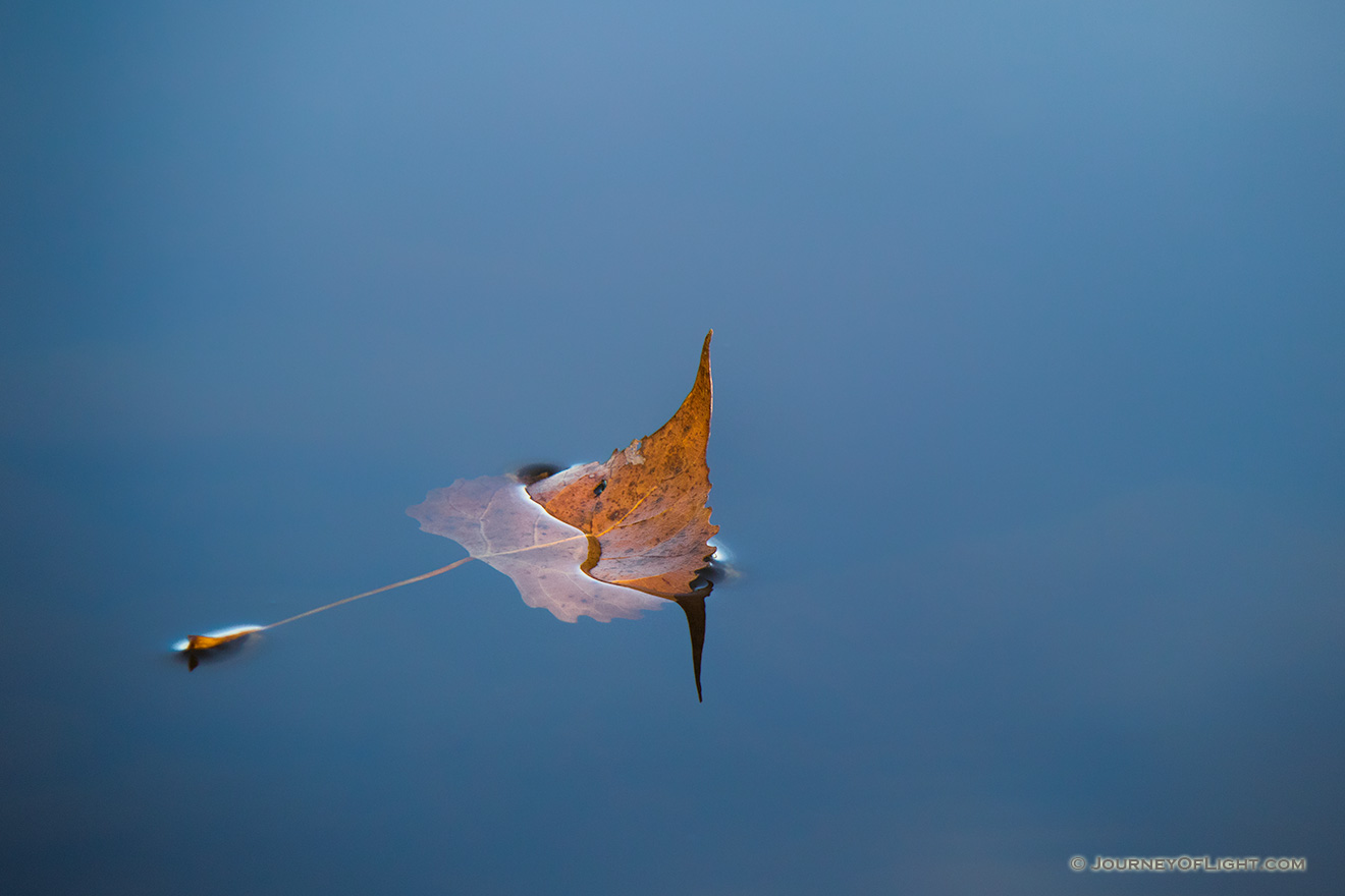 A fallen autumn leaf floats on the calm surface of Wehrspann Lake at Chalco Hills Recreation Area. - Nebraska Picture