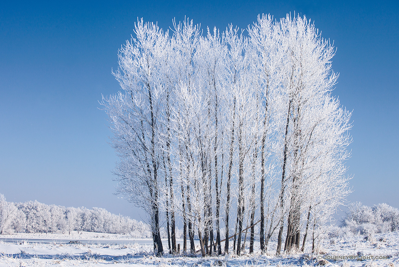 On a cold February morning after the fog cleared, hoarfrost clung to a stand of cottonwoods at Chalco Hills Recreation Area. - Nebraska Picture