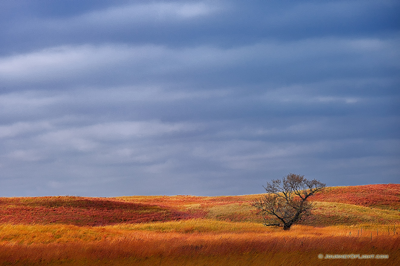 A single tree sits upon the sandhills at Ft. Niobrara National Wildlife Refuge. - Ft. Niobrara Picture