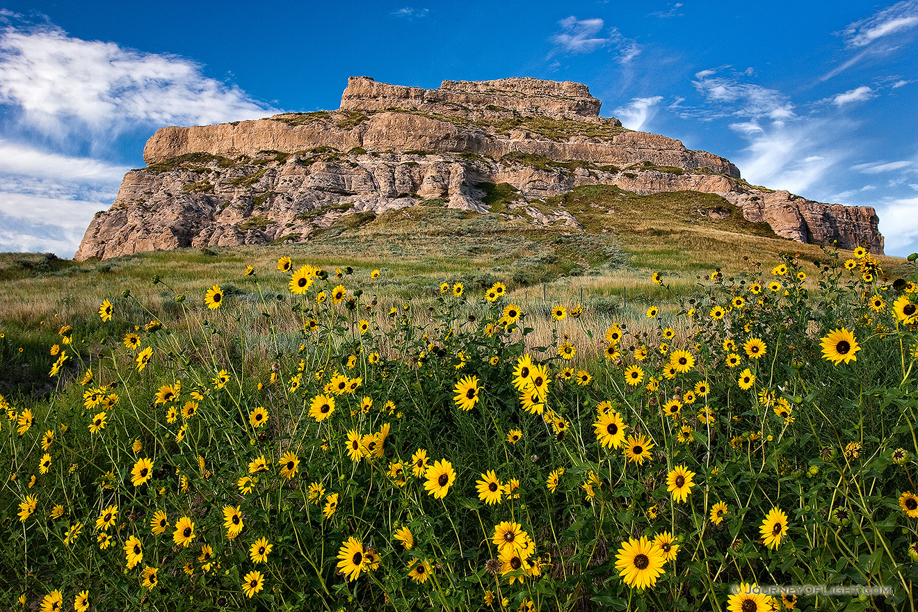 On a sunny autumn afternoon, sunflowers grow in front of Courthouse Rock in western Nebraska. - Nebraska Picture