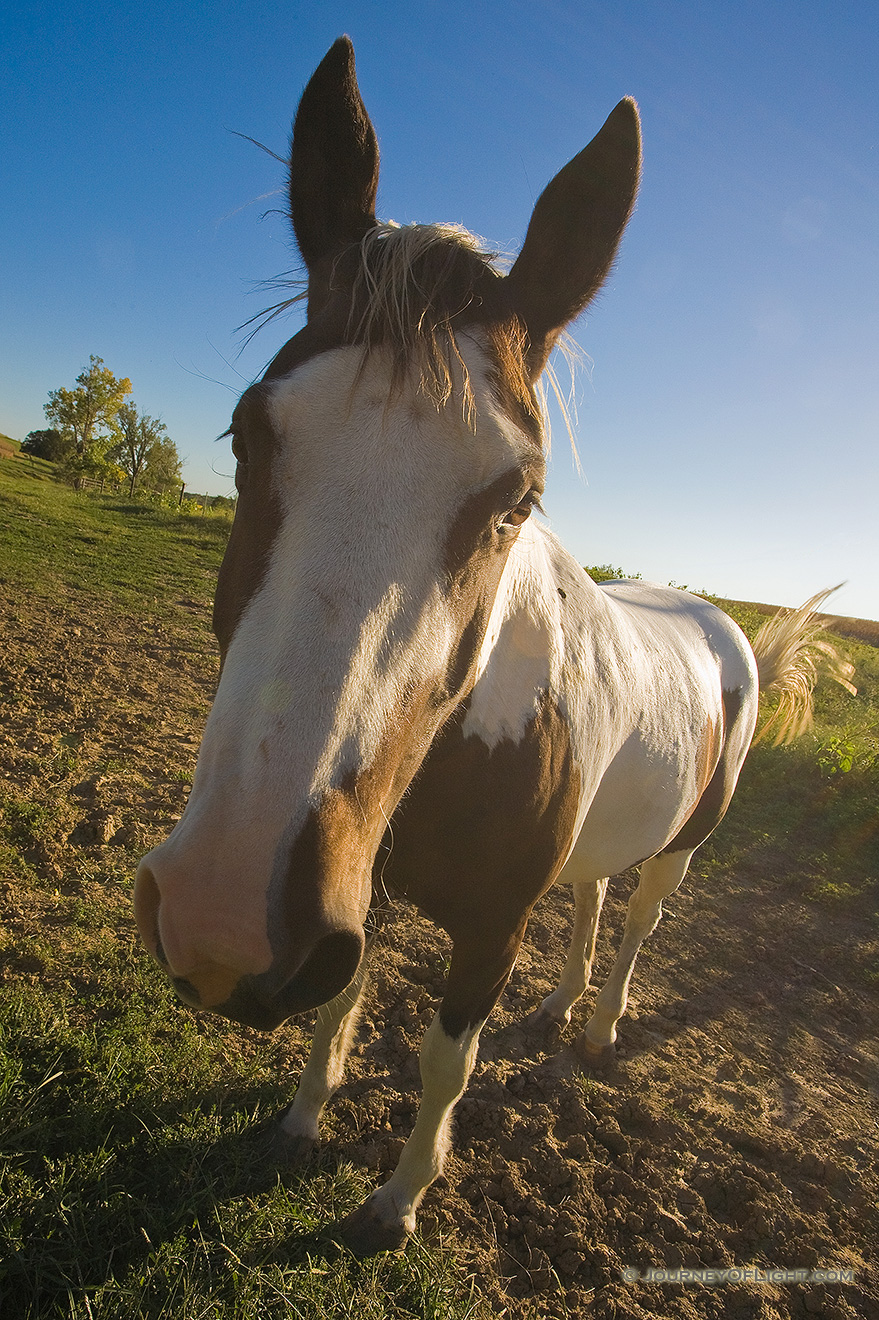 Wide-Angle treatment of a friendly horse. - Nebraska Picture